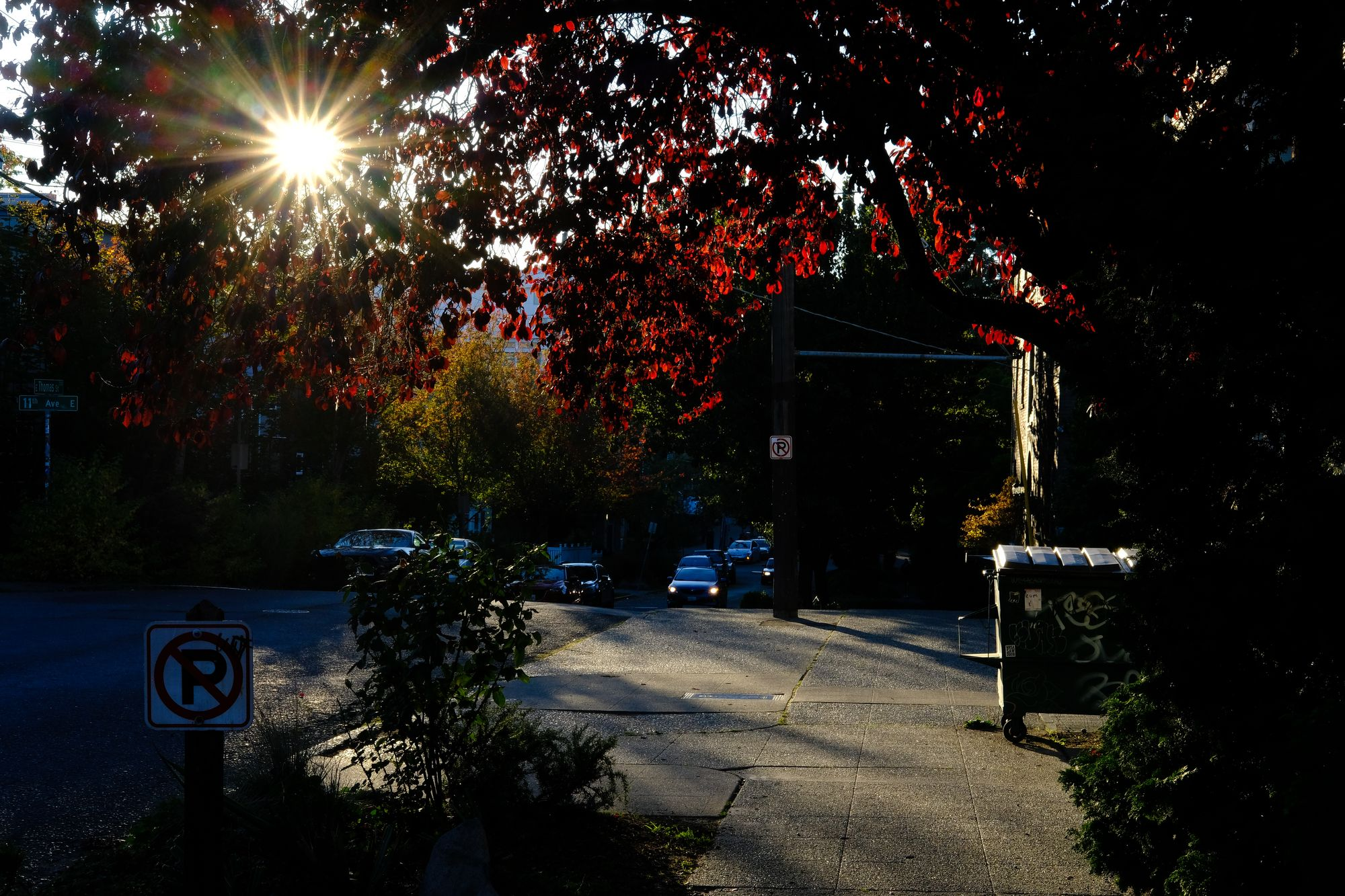 Capitol Hill Seattle sunflare